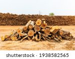 A Pile Of Stacked Firewood ...