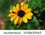 A Ladybug On A Bright Yellow...