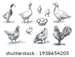 Poultry   Set Of Farm Animals...