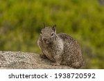 Squirrel At Yosemite Park In...