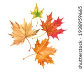 Beautiful Autumn Set With...