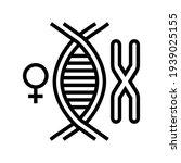 female chromosome genetic line... | Shutterstock .eps vector #1939025155