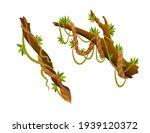 liana or jungle plant or vine...   Shutterstock . vector #1939120372