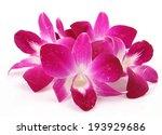 pink orchids | Shutterstock . vector #193929686
