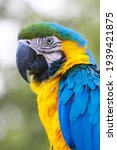 A Macaw Type Parrot With Yellow ...