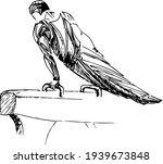 Vector Stylized Gymnast  Pommel ...