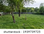 Large Yard With Green Grass ...
