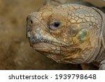 Portrait Of The Desert Tortoise ...