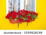 Red Geranium In A Hanging Box...