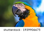 Macaw Type Parrot With Orange...