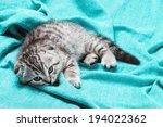 Stock photo bored scottish fold kitten lying on the bed 194022362