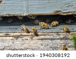Small photo of The bees at front hive entrance macro close up. Bee flying to hive. Honey bee entering the hive. Hives in an apiary with working bees flying to the landing boards Honey Bees at front hive entrance clo