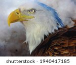 American Bald Eagle In All It's ...