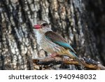 Brown Hooded Kingfisher On A...