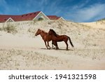The Wild Horses Of Corolla On...