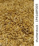 paddy rice is the food of...   Shutterstock . vector #1941689305