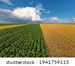 Aerial view corn  sunflower and ...