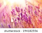 soft focus on beautiful... | Shutterstock . vector #194182556