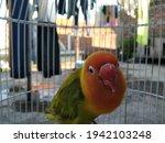Lovebird Is One Type Of Bird...