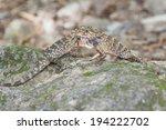 two lizards fighting in the... | Shutterstock . vector #194222702