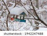 Snow Covered Bird Feeder...
