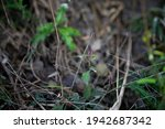 green plant in a forest with... | Shutterstock . vector #1942687342