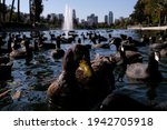 A Duck With A Group Of American ...