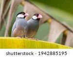 Nature Wildlife Image Of...