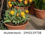 Display Of Spring Flowering...