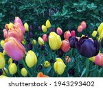 Outdoor Closeup Of A Field Of...