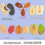 vector of bean  nut  seed  ...   Shutterstock .eps vector #1943610058