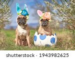French bulldog dogs with easter ...
