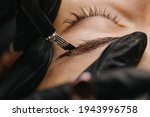 Small photo of eyebrow microblading. A master in black gloves holds a blending needle over the brow of the model. Macro photography
