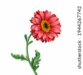 Red Gerbera On A White...