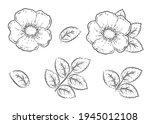 art botanical hand drawn... | Shutterstock . vector #1945012108