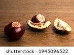 Buckeye Chestnut And Conker In...
