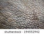 Rhino  White Rhinoceros  Skin...