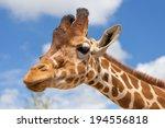 close up shot of giraffe head | Shutterstock . vector #194556818