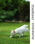 cat | Shutterstock . vector #194580932