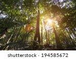 cairns rainforest | Shutterstock . vector #194585672