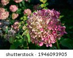 Delicate Pink  Purple And...