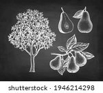 pear tree and fruits. chalk... | Shutterstock .eps vector #1946214298