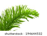 Leaves Of Palm Tree Isolated O...