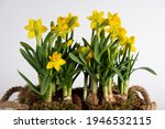 yellow spring flowers  fresh... | Shutterstock . vector #1946532115