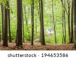 Chapel In The Beech Forest  ...