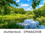 Summer Green Forest Pond...