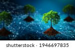 Tree With Soil Growing On  The...