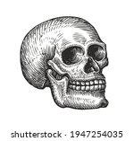 human skull in vintage gothic... | Shutterstock .eps vector #1947254035