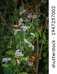 Colorful Butterflies Against...