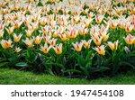 Spring Flowers   Heart Delight...